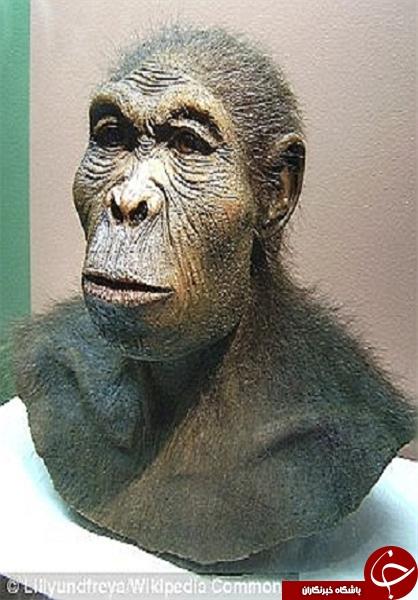 تصاویری که نشان دهنده راست دست بودن انسان های اولیه است