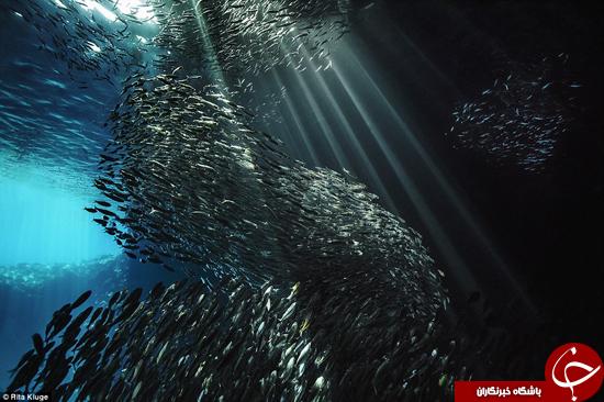 نهنگها را از زاویهای دیگر ببینید +تصاویر