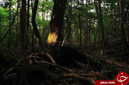 با «جنگل خودکشی» آشنا شوید /تصاویر