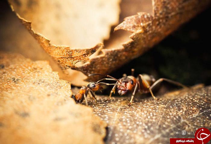 زندگی مورچه ای///////در حال کار