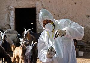 انجام سالانه ۲۵ میلیون دوز واکسن دام سبک در اردبیل