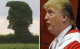 باشگاه خبرنگاران - شباهت عجیب نیم رخ عصبی ترامپ با یک درخت + تصاویر