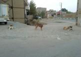 باشگاه خبرنگاران - کوچه و خیابانهای پاکدشت، محل پرسه سگهای ولگرد + تصاویر