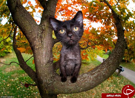 گربههای پرنده +تصاویر