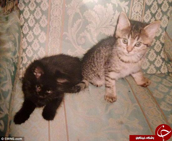 گربه یک چشم بعد از 11 سال به پیش خانواده بازگشت +تصاویر