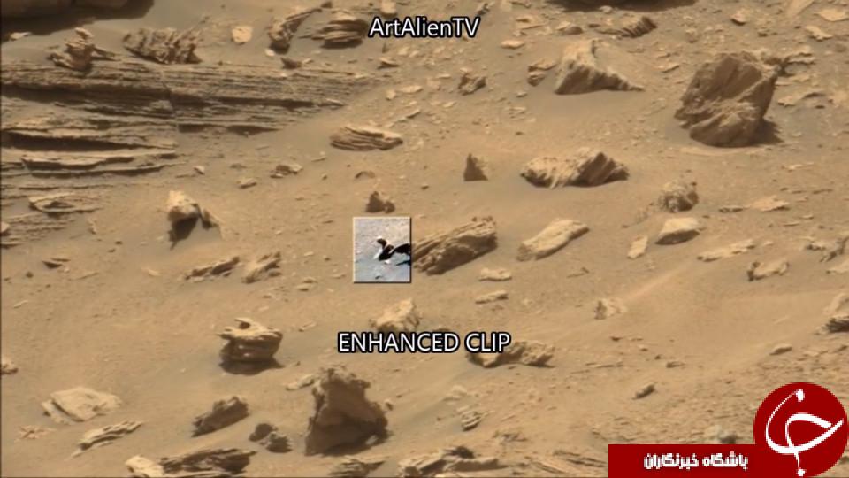 جانوری خزنده را در مریخ پیدا کرده ایم+تصاویر