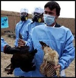 فوری/ هشدار آنفولانزای مرغی؛ شکار پرندگان وحشی تا اطلاع ثانوی ممنوع
