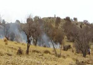 آتشسوزی در جنگلهای پراشکفت ممسنی + فیلم