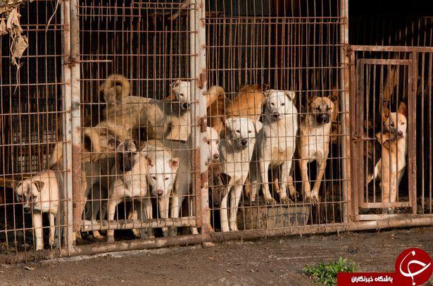 با کشوری که 2.5 میلیون سگ سالانه سر میبرد آشنا شوید+تصاویر