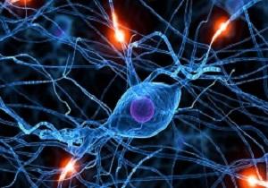 آموزش بیش از 600 مقاله در سمینار علوم اعصاب بالینی