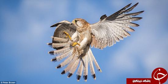 تصاویر خیره کننده از طبیعت