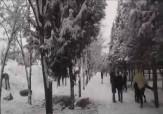 باشگاه خبرنگاران - شادی مردم مشهد در یک روز زیبای برفی + فیلم
