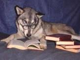 باشگاه خبرنگاران -اولین سگی که مدرک کارشناسی گرفت+عکس