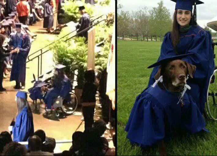 اولین سگی که مدرک کارشناسی گرفت+عکس