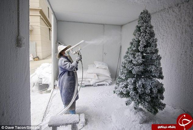 مراحل ساخت درختان کریسمس , ساخت درختان کریسمس در چین , جشن کریسمس , کارگاه ساخت درختان کریسمسر