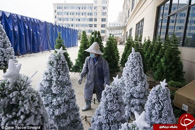 کارگاه ساخت درختان کریسمس +تصاویر
