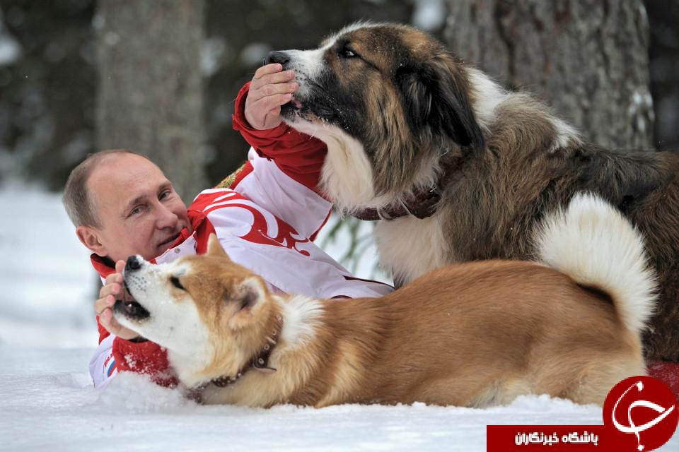 عکس ولادمیر پوتین , بیوگرافی ولادمیر پوتین , هدیه ژاپن به پوتین , رد هدیه ژاپن توسط پوتین