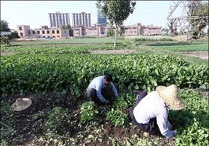 بحران حل نشده آبیاری سبزیها با آب آلوده/ راه حل چیست؟