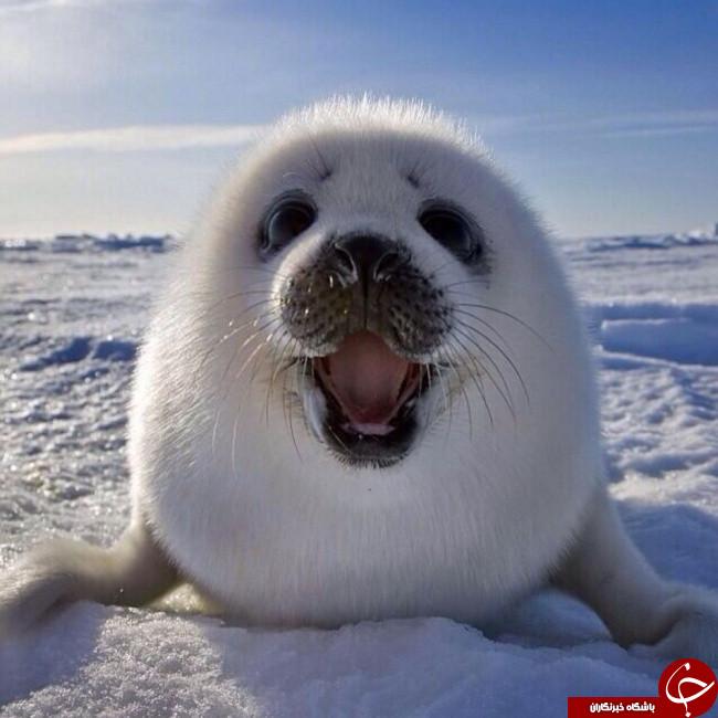 تصاویری جالب از خنده حیوانات که شاید تا بحال ندیده اید
