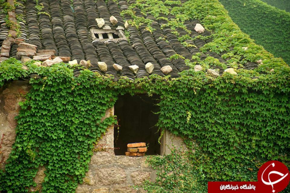 تصاویری خیره کننده از یکی سرسبزترین روستاهای جهان