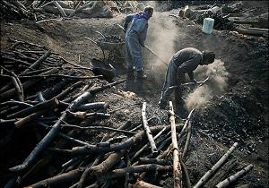 تخریب 30 کوره زغال در مناطق جنگلی استان اردبیل