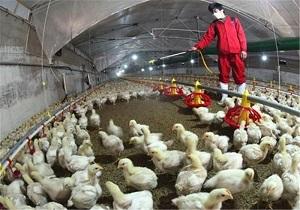 نبود بیماری آنفلوانزای پرندگان در اردبیل
