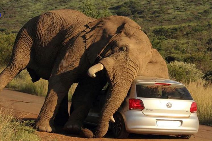 حملۀ مرگبار گلۀ فیلها به یک زن در آفریقای جنوبی