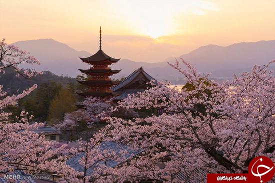 این تصاویر را از دست ندهید/زیبایی های بهار در نقاط مختلف جهان