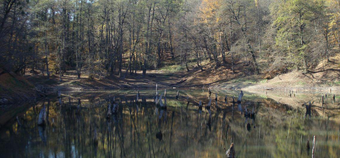دریاچه ای در دل جنگل های بکر + تصاویر