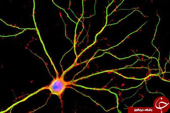 مغز انسان چقدر قوی تر از تصورات ماست؟