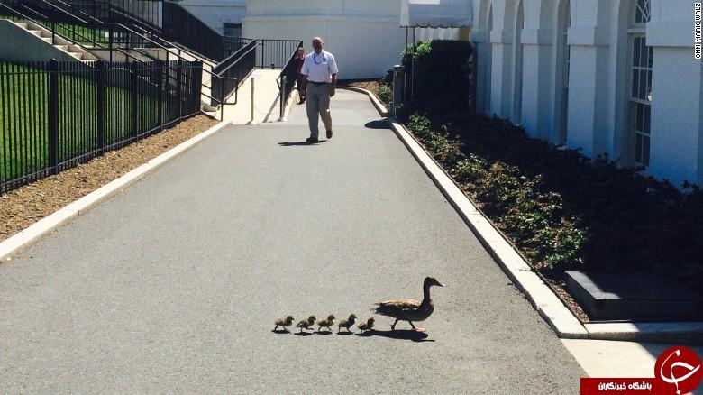 چه حیواناتی در کاخ سفید زندگی میکنند  تصاویر!