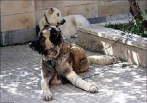 نگهداري سگ در خانه از نگاه قانون