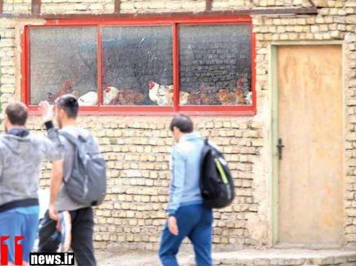 عکس/ تمرین تیم استقلال با مرغ و خروس ها
