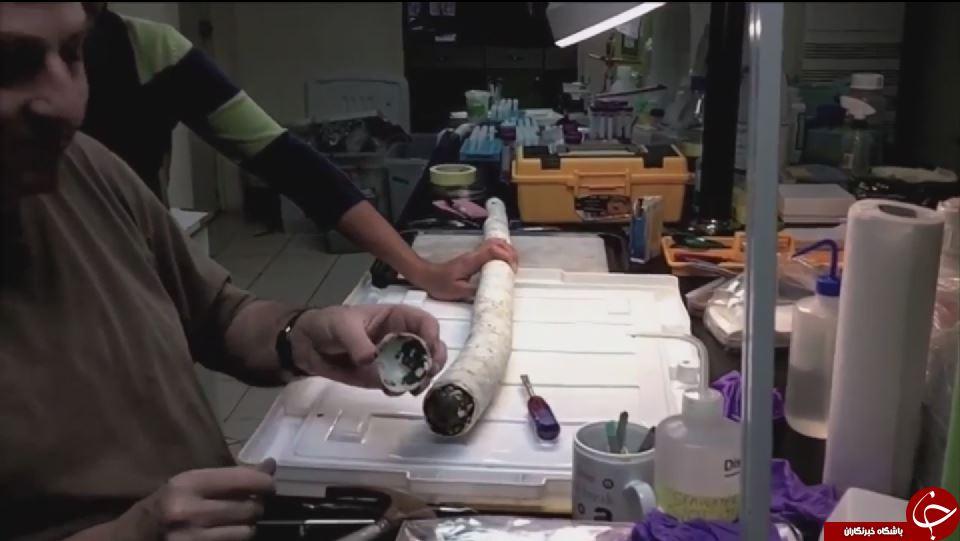 پیدا شدن یک کرم کشتی غولپیکر زنده برای نخستین بار+ تصویر