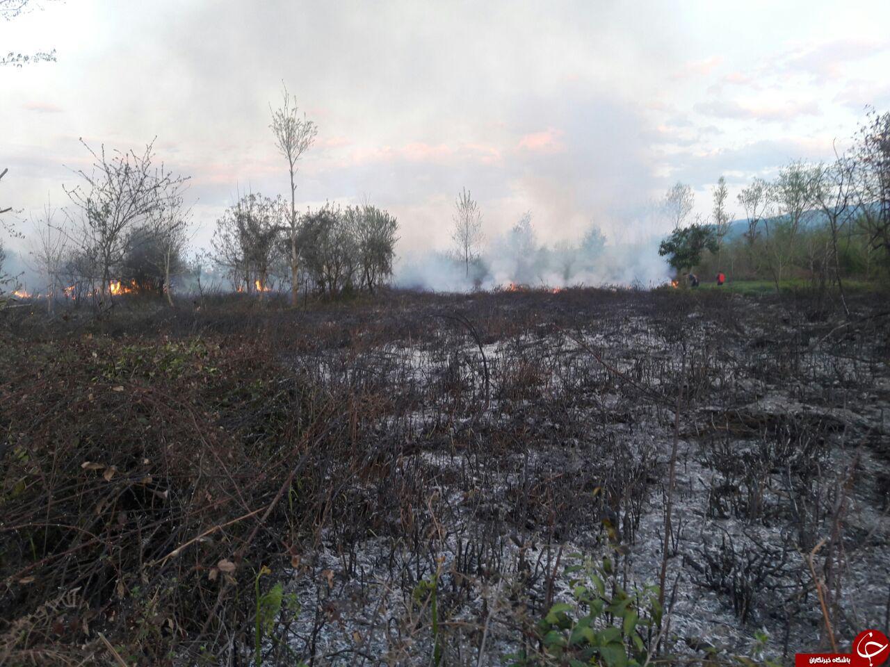 آتش سوزی در یک هکتار از باغات چای منطقه توسکا محله قاسم آباد علیا