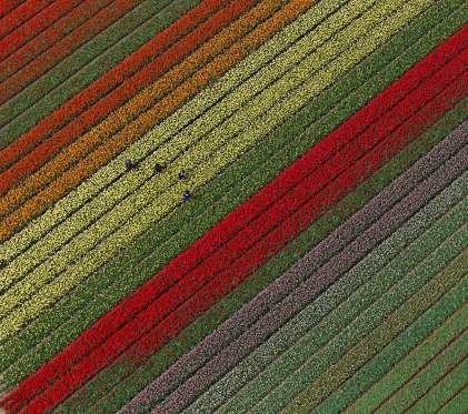 باغ رز در هلند
