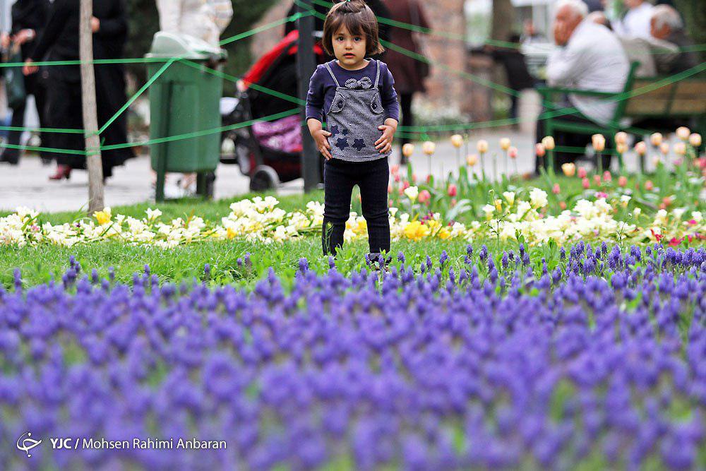 جشنواره گلهای پیازی و بهاری در بوستان بزرگ ملت – مشهد+تصاویر