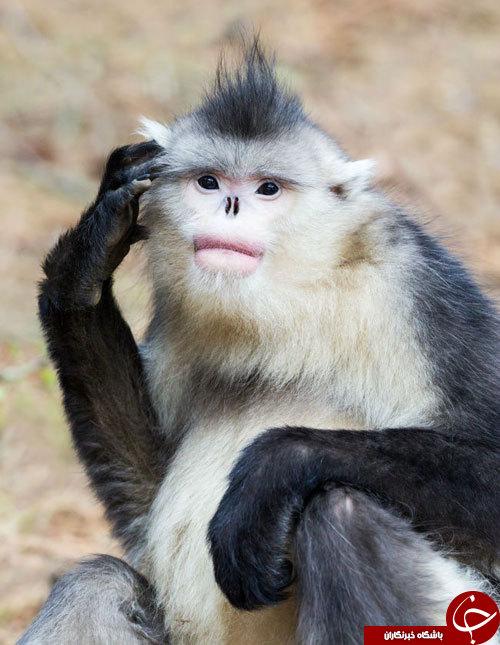 با این 10 جانور کمیاب آشنا شوید+تصاویر