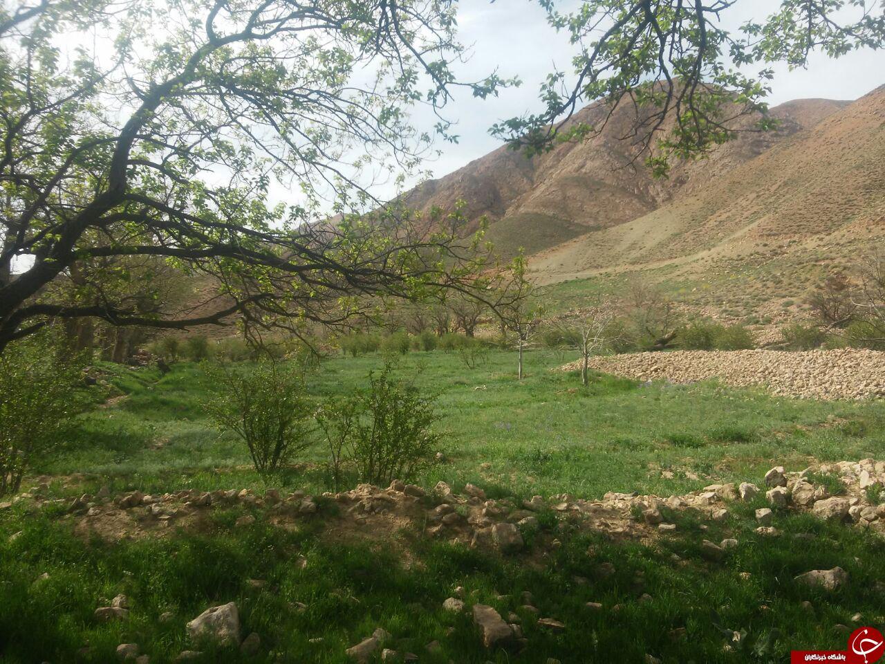 طبیعت بکر و گردشگری روستای «شیخ علی» + تصاویر