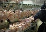 باشگاه خبرنگاران -کشتارگاه مرغ سلماس با ظرفیت تولید سالانه 180 هزار قطعه افتتاح میشود