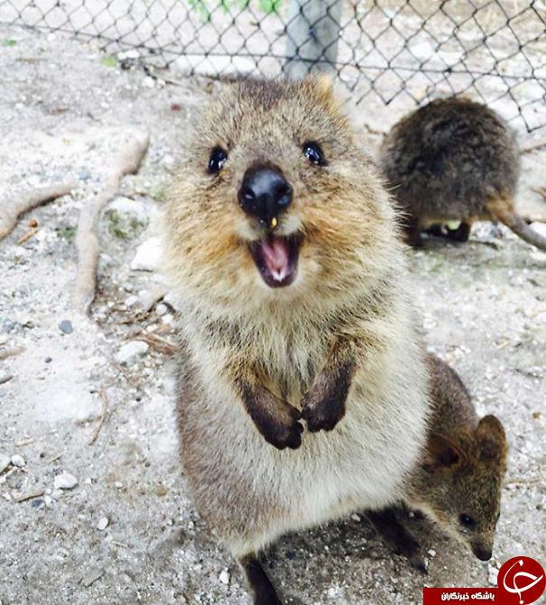با خوشحال ترین حیوان جهان آشنا شوید+تصاویر