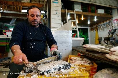 باشگاه خبرنگاران -بازار ماهی فروشان فریدونکنار - مازندران