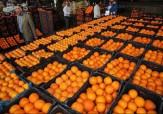 باشگاه خبرنگاران - کاهش قیمت پرتقال تنظیم بازار در خراسان رضوی