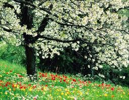 قیامت را در فصل بهار ببینید!