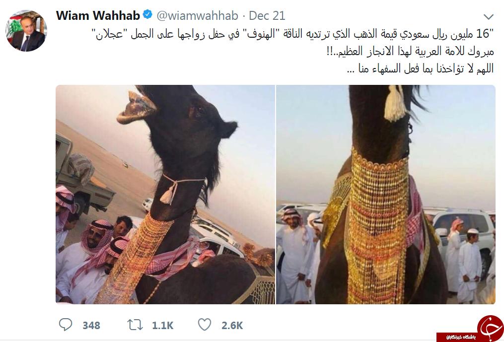 ازدواج جنجالی و پرهزینه دو شتر در عربستان +تصاویر