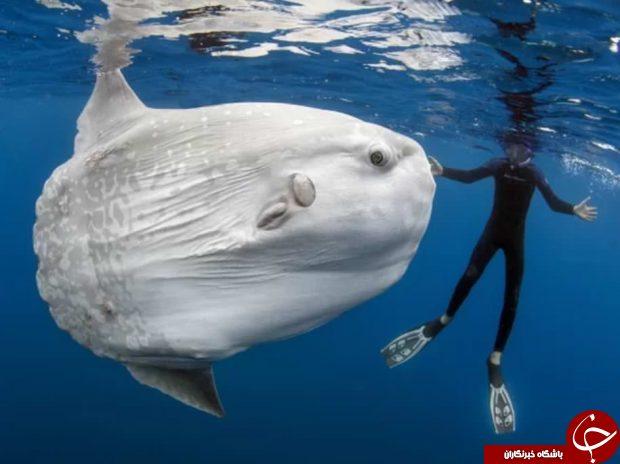 عجیبترین و ترسناکترین هیولاهای دریایی سال 2017 +تصاویر
