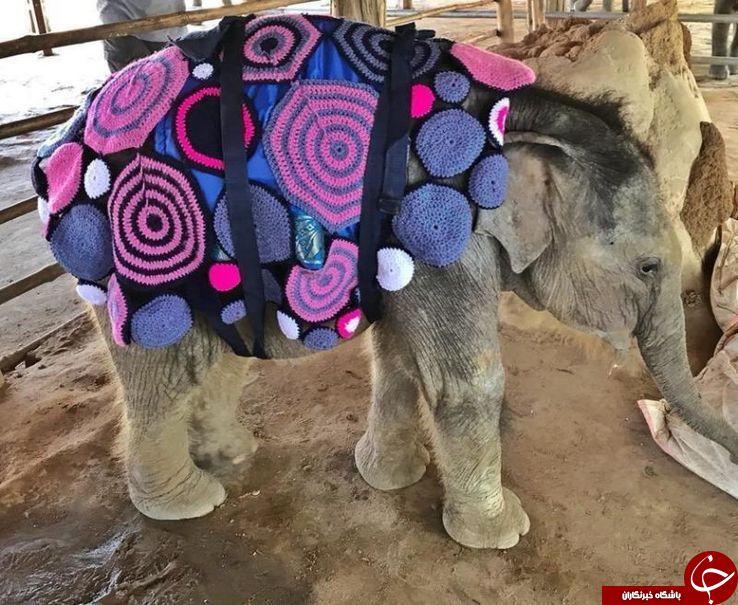 لباسهای زمستانی بچه فیلها +عکس