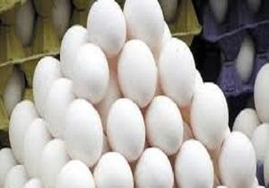 ورود اولین محموله تخممرغ وارداتی به اردبیل