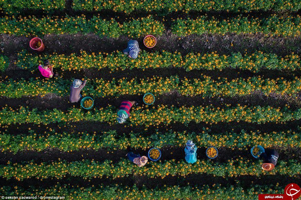 زیباترین تصاویر هوایی سال 2017 از گوشه و کنار جهان+ تصاویر
