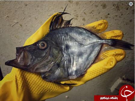 موجودات عجیبی که یک ماهیگیر روسی صید کرد+تصاویر